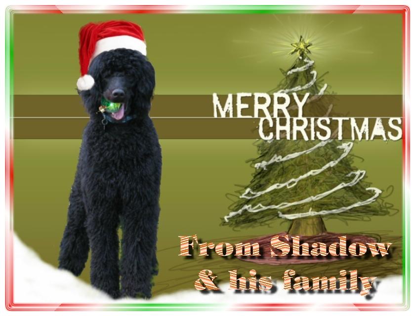 Name:  shadow-christmas-card-3.jpg Views: 528 Size:  291.5 KB